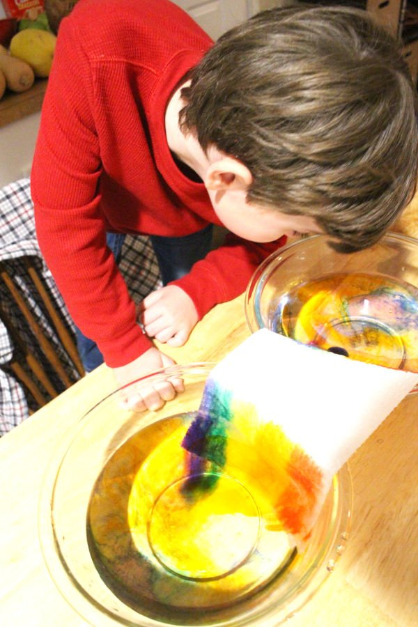 student leaning over and observing capillary stem activity for kids