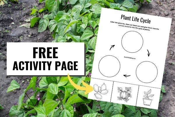 plants behind a copy of the plant life cycle stages worksheet which features a coloring AND a cutting activity