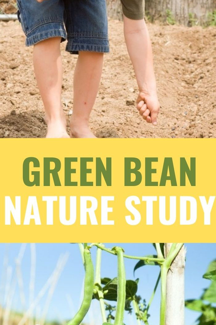 green bean nature study natural science for kids promotional image
